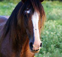 Tennessee Walker Stallion by Samantha Dean