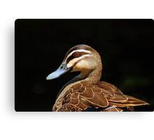 Pacific Black Duck Canvas Print