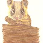 Little Ringtail Possum by Equinspire