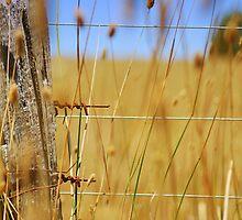 Farm Days by deannedaffy