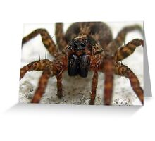 Is this a Wolf Spider or a Recluse? Greeting Card