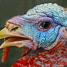 Read My Beak...You Will Eat Fish At Thanksgiving!!! by Heather Friedman