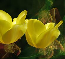 Yellow tulips by LudaNayvelt