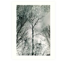 bare trees # 2 Art Print