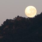 Moon Roll by Overlander4WD
