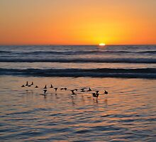 California Sunset by chris-cooper
