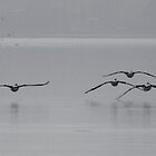 Pelicans on A Misty Day by CraftyThings