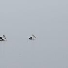 Pelicans in the mist 2 by CraftyThings