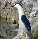 Heron by lynell