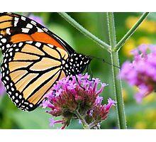 Sweet Nectar Photographic Print