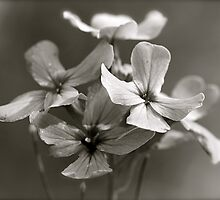 Small Flowers by Jesse J. McClear