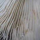 Mushroom 3982 by Doug Wilkening