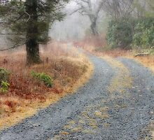 Quiet Road by Tibby Steedly