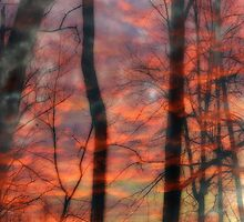 Dusk Dreams by Tibby Steedly