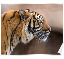 Profile of A Tiger Poster