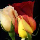 Tres Rosa by Donna Adamski