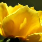 Yellow Side by Donna Adamski