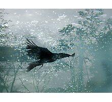 Eternal Flight Photographic Print