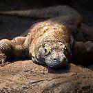 Komodo by Shannon Beauford