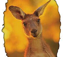 Kangaroo - Western Australia by Dave Catley