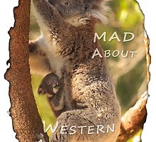 Koala & Cub - MAD About Western Australia by Dave Catley