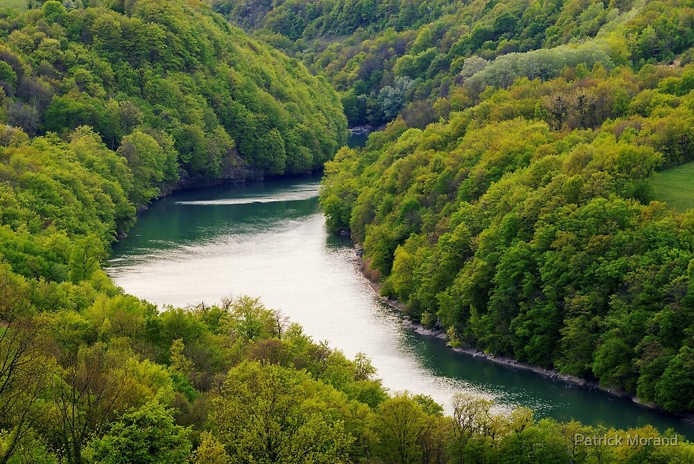 The Rhône river through the forest by Patrick Morand