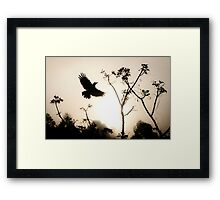 Crow in morning light Framed Print