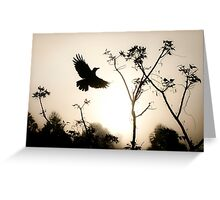 Crow in morning light Greeting Card