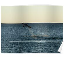 I can fly!!! Dolphin Jump Poster