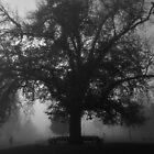 Fog by Joel Bramley