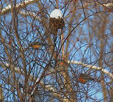 Winter Robins by SmilinEyes