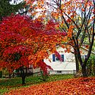 Beautiful colors of Fall by vadim19
