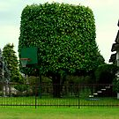 Basketball? by HelmD