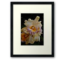 Peach Orchid Framed Print