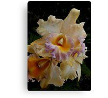 Peach Orchid Canvas Print