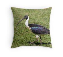 Straw-necked Ibis Throw Pillow