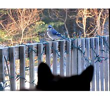 I See You!   Photographic Print