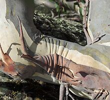 Snow Gum, (detail), Snowy Mountains, N.S.W. Australia. by kaysharp