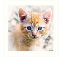 Innocence - Eyes of a Kitten Art Print