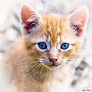 Innocence - Eyes of a Kitten by Mark Tisdale