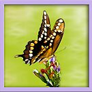 Butterfly's Are Forever by glink