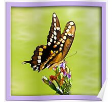 Butterfly's Are Forever Poster