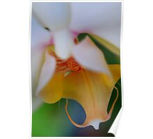 Orchid Softness Poster