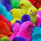 Colored Chicks by jerry  alcantara