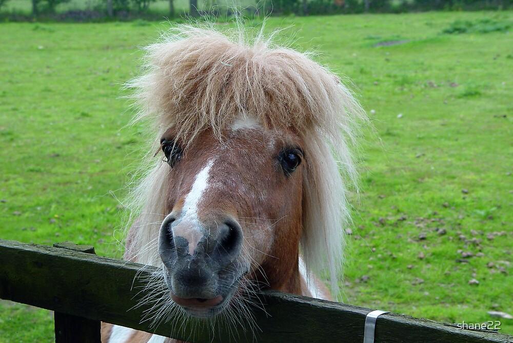 Pony II by shane22