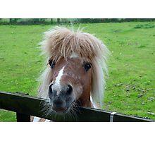 Pony II Photographic Print
