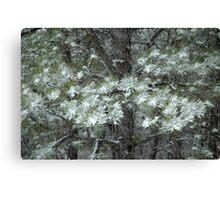 Snowy Pines Canvas Print