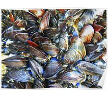 Colourful Mussels Poster