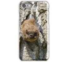 Pipistrello, Lago Chiusi, Toscana, Italia iPhone Case/Skin