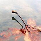 Float Leaf 2 by Jefferson C Hunt
